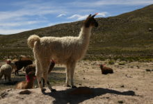 Photo of Perù, storia di un viaggio tra cultura e tradizione