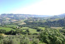 Photo of Le Marche nel calice: il territoriosvelato attraverso i suoi vitigni